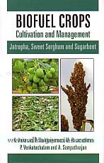 Biofuel crops :  cultivation and management : jatropha, sweet sorghum and sugarbeet /